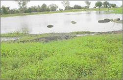 Paga Crocodile Pond